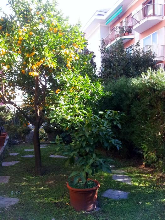 Immobiliare castellani albaro orsini traversa silenziosissima 160 mq con meraviglioso - Il giardino di albaro ...